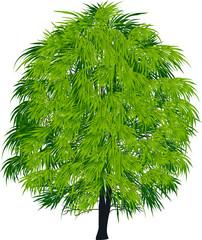 dark green isolated tree illustration
