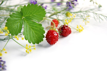 wild strawberry and herbs