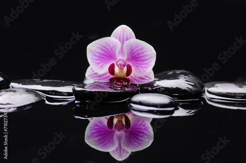 Poster Spa beautiful orchid with therapy stones