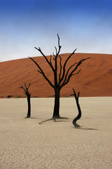Dead trees in Deadvlei, desert of Namibia