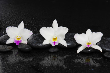 Set of white orchid on pebbles –wet background
