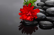 still life with black pebbles and red ranunculus flower