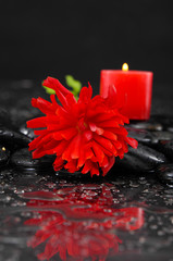 Wet background with red candle with red ranunculus