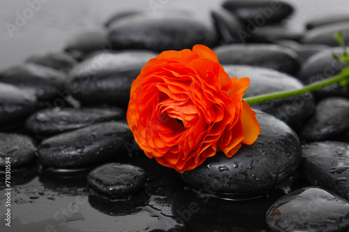 Wet pebbles and set of ranunculus flower © Mee Ting