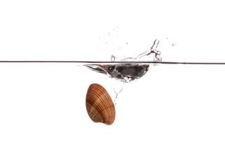 Sinking sea shell