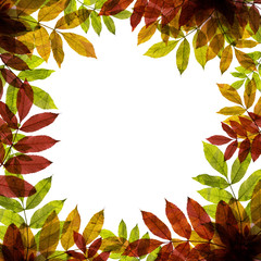 Autumnal background with colorful leafs and place for text
