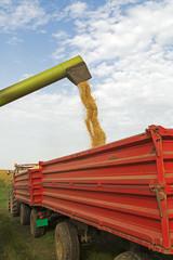 Combine harvester unloads soybean seeds after harvest