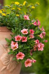 red petunias flowers in garden