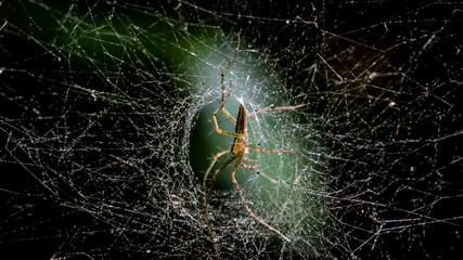 Creepy Spider on a spider web in tropical rain forest. HD