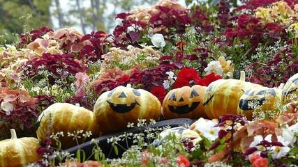 ハロウィンのかぼちゃと花畑にフォーカスイン_2