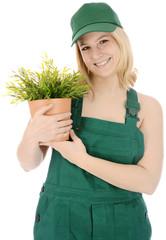 Gärtner in Arbeitskleidung hält Pflanze im Topf