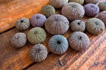Urchins