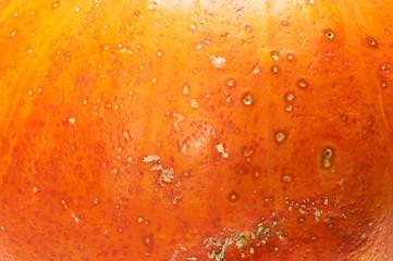 Textured, pattern, organic, skin, spotted, pumpkin, peel, orange