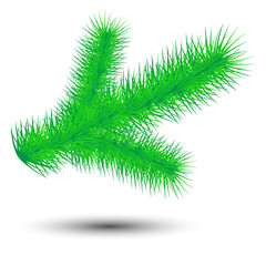 vector christmas green conifer twig isolated on white background