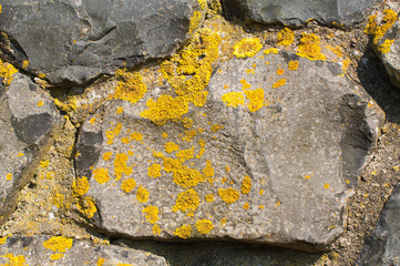 Lichens on a stone wall