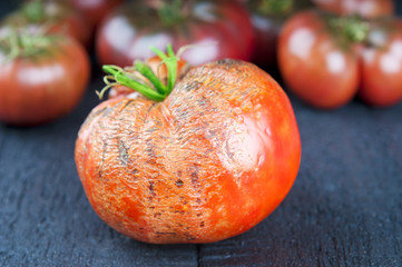Spoiled and ripe tomatoes on wooden background