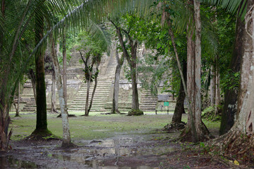 Jungle with Temple