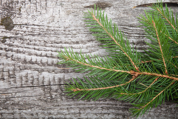 spruce twig on a wooden background