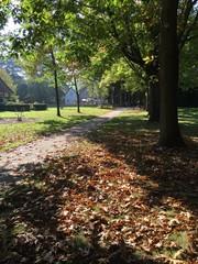 Parkanlage im Herbst