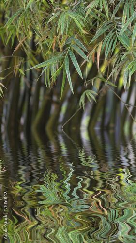 In de dag Bamboo Bamboo trees