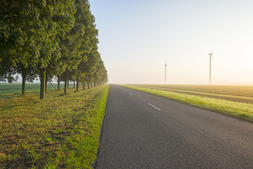 Trees along a road in autumn at sunrise