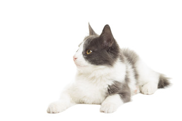 lovely cat lying on a white background on a white background