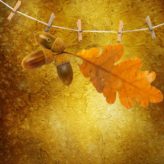 Oak branch with acorns hanging on clothesline on abstract backgr
