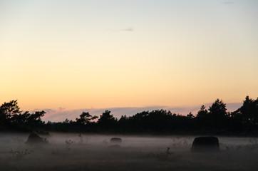 Rocks at misty summer evening