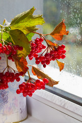 Branch red berries (Viburnum) in a jug on the window after rain