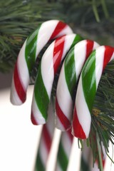 Candy Canes On Tree