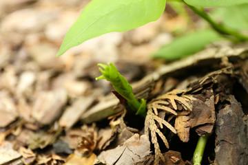 Sprout in garden