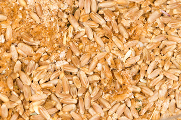 wheat grain. close-up