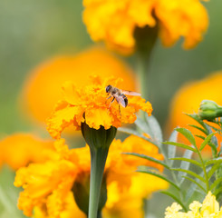 orange flower in nature