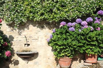 piante fiori da ornamento montefalco umbria