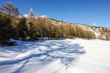 Ombra di albero su neve