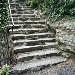 Stone steps in summer garden