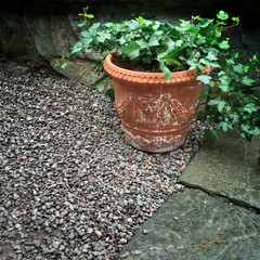 Clay pot with green ivy