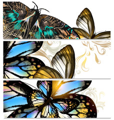 Backgrounds set with butterflies