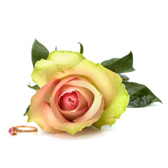 Beautiful rose with wedding ring  isolated on white background