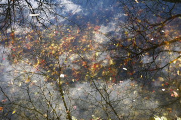 水底の落ち葉と映る桜の影