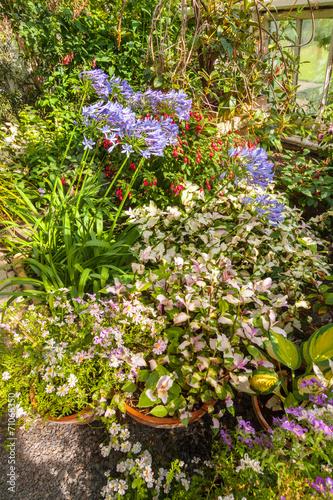 Papiers peints Azalea Variety of flowers in the garden
