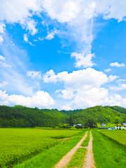 秋田の田園