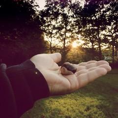 Kastanie in einer Handfläche