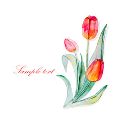 Beautiful banner for text with flowers tulip