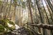 canvas print picture - Waldwanderweg