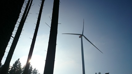Windkraftanlage und Bäume im Gegenlicht
