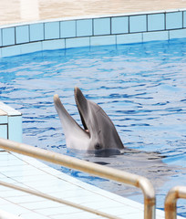 dolphin at the dolphinarium