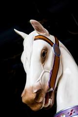 White Carousel Horse Head