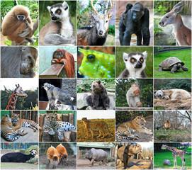 Collage photos of some wild animals