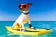 Leinwanddruck Bild - surfer dog